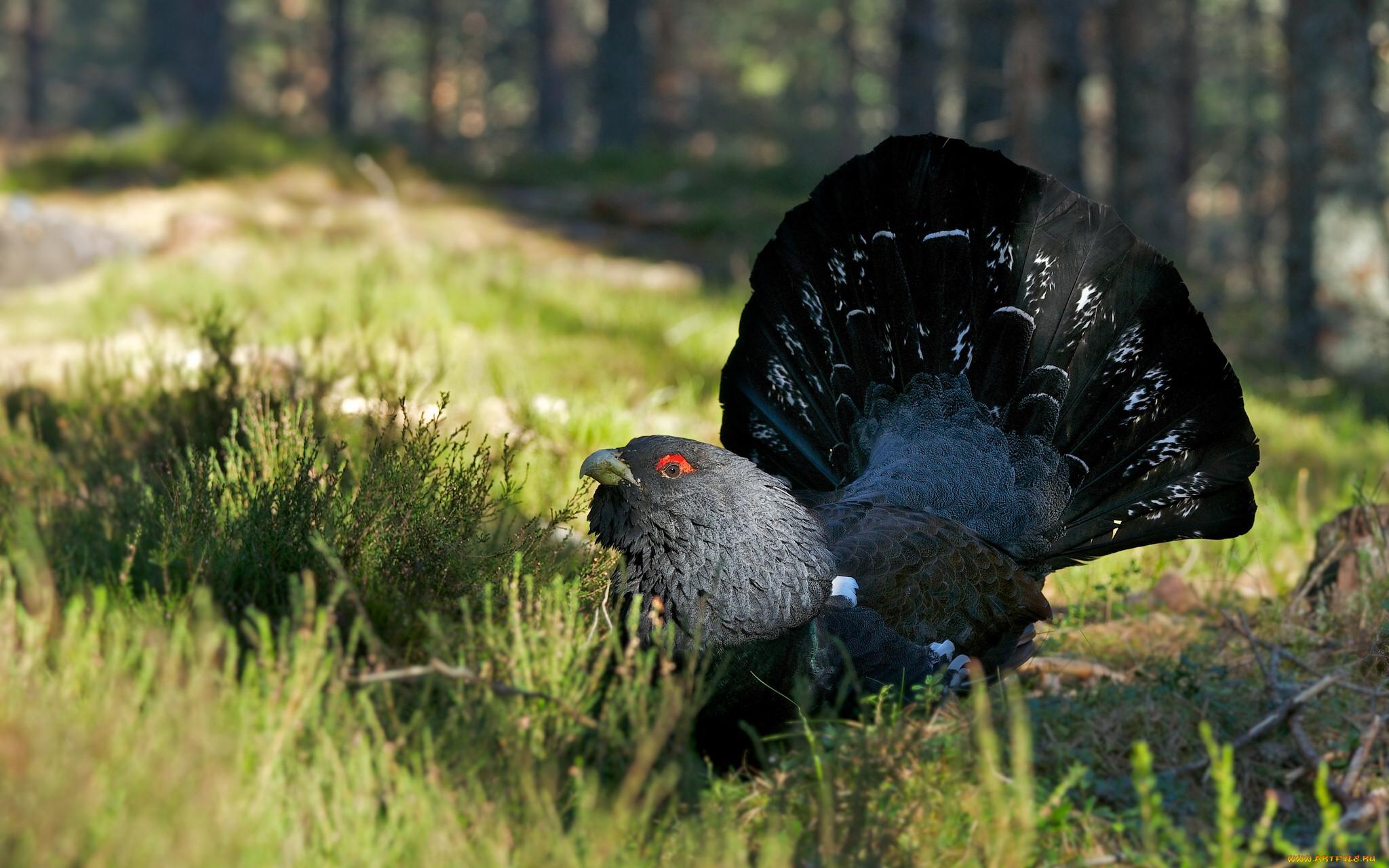 грани, картинки лесных животных и птиц его помощью